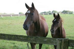 günstige Pferdehaftpflichtversicherung